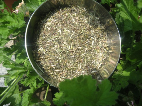 Hamamelisblätter, geschnitten, Bio, 30g