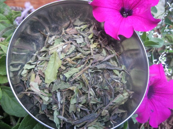Weißer Tee, China Oolong White Downy BIO