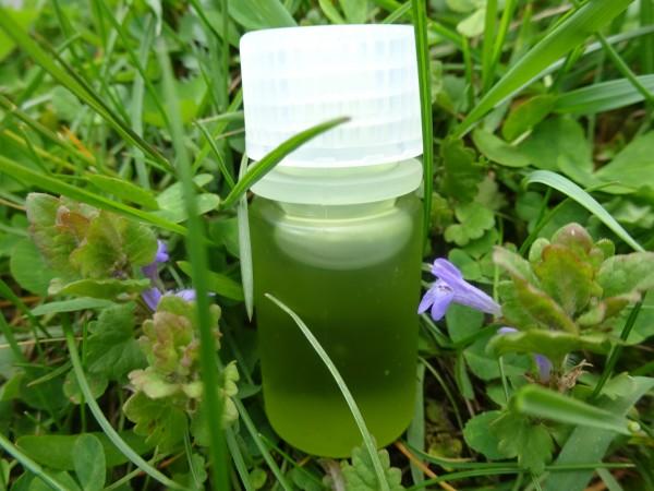 Calophyllumöl Inophyllum, Tamanuöl, Bio, Preissenkung