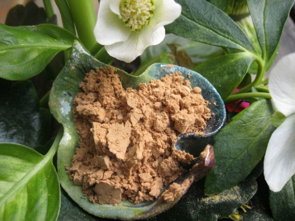 Kardamom, Elletaria cardamomum, BIO, Indien